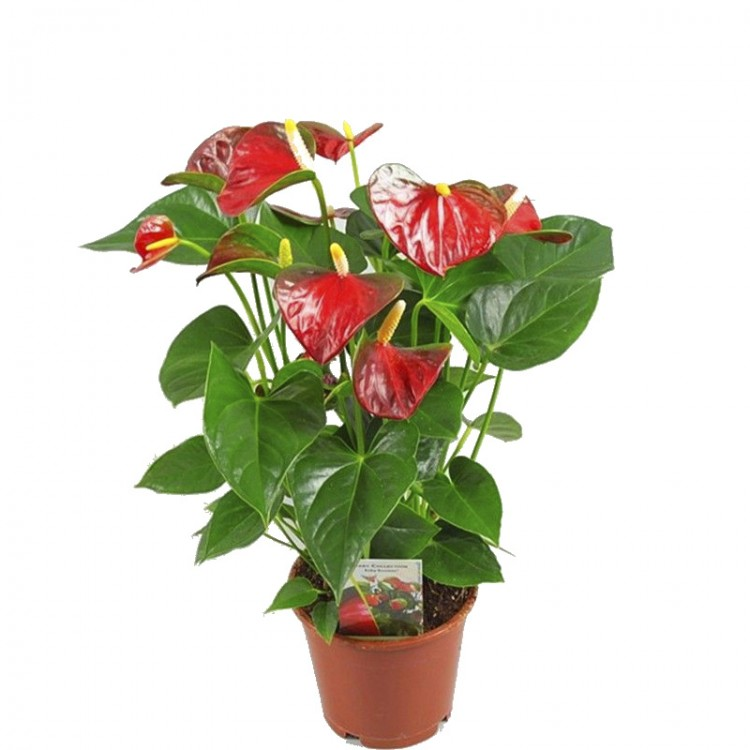 Эксклюзивный, купить цветы домашние в интернет магазине